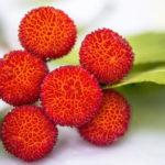Miele di corbezzolo - frutti di Arbutus unedo