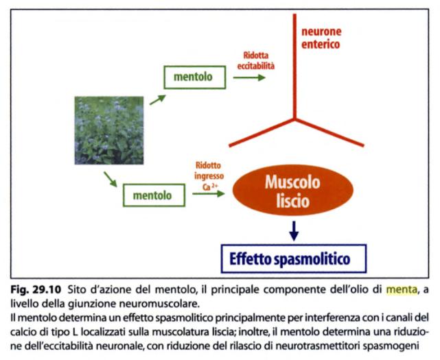 Menta - Meccanismo di azione del mentolo tratto da Fitoterapia - Impiego razionale delle droghe vegetali (Capasso)