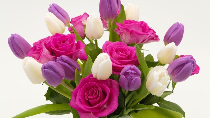 fiori e piante copertina