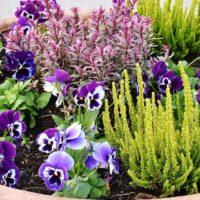 piante e fiori copertina