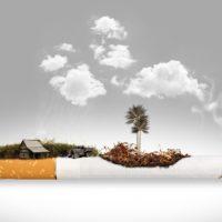 tabacco copertina