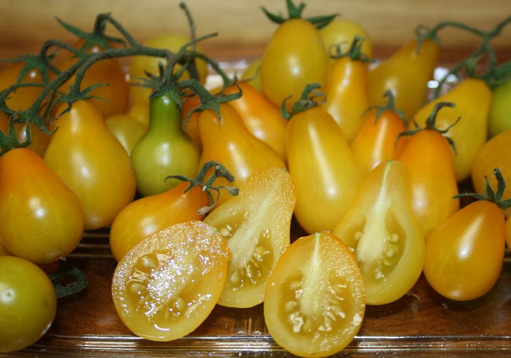 Pomodori Beams's gialli