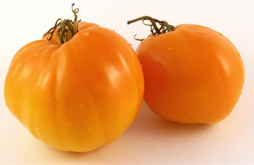 Pomodori Tangerine Pomodori Tangerine Ribbed