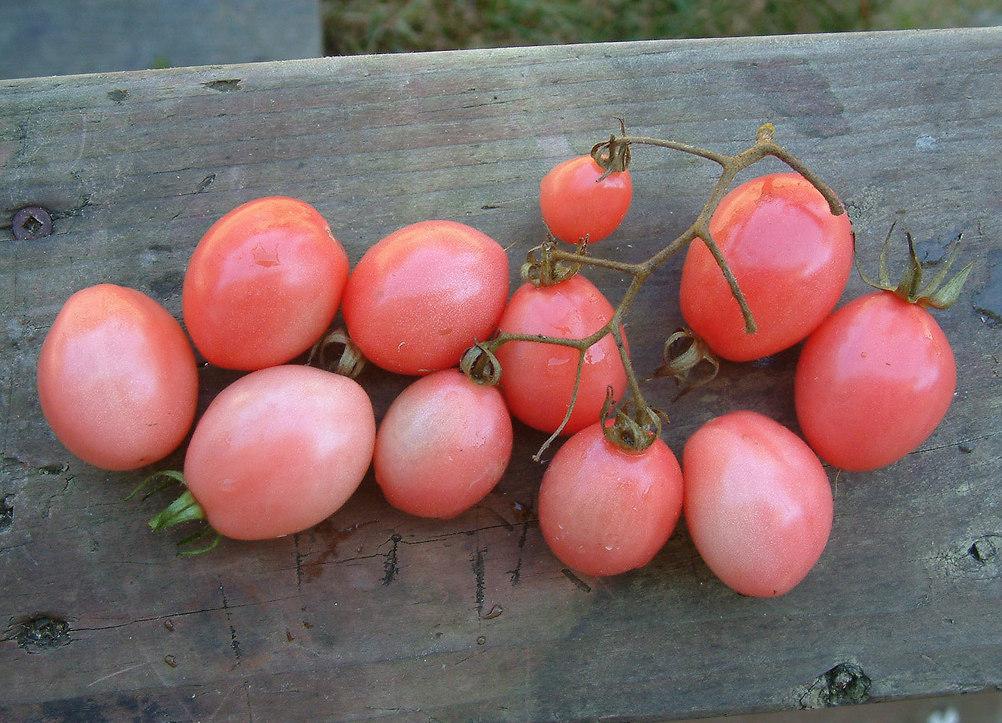 Pomodori Thai Pink Eggs