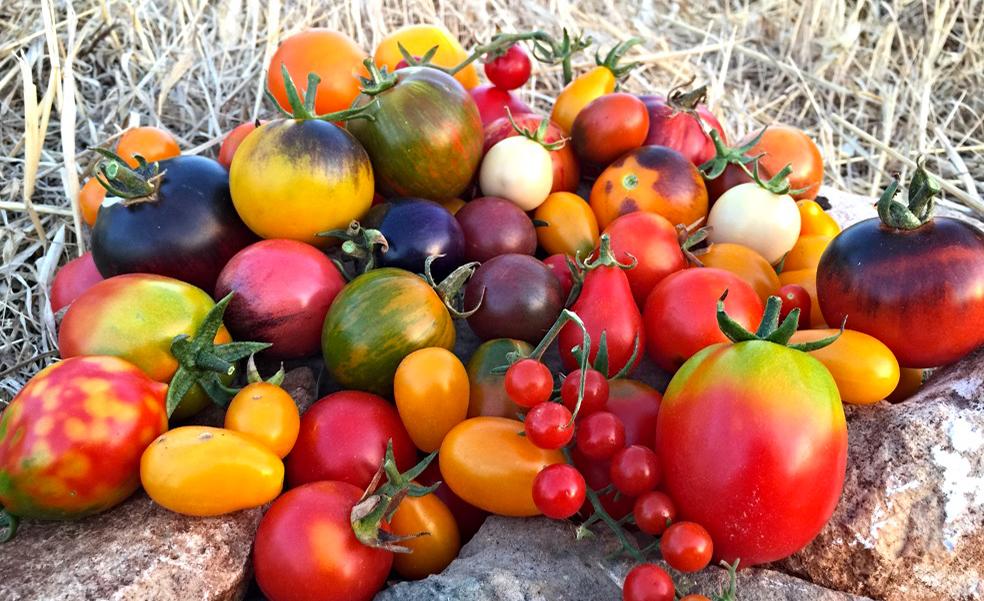 Composizione di pomodori appartenenti a diverse varietà.