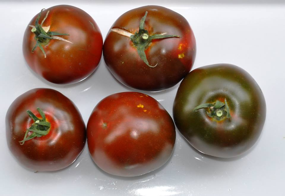 Pomodori neri di Crimea