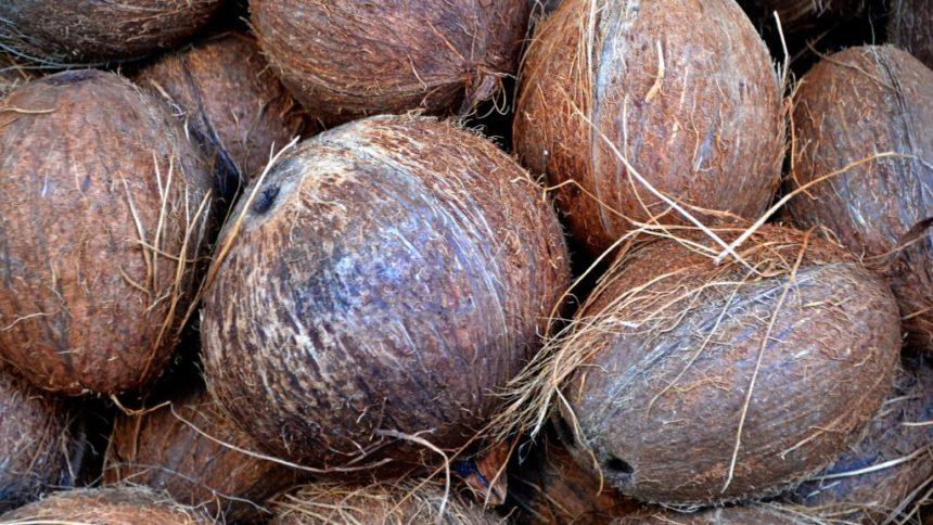 noci di cocco e marinai
