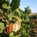 Tema del mese: dopo la Vendemmia, il Vino