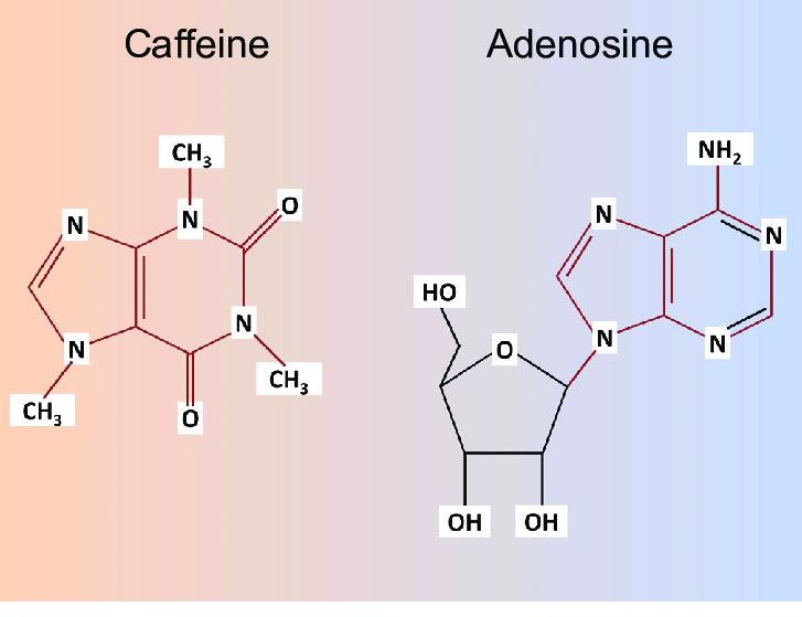 Caffeina del caffè a confronto con l'adenosina
