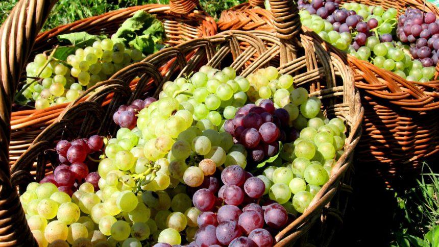 Cucina autunnale - cestino di uve bianche e rosse