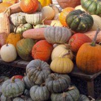 Zucca: tutte le varietà invernali